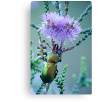 Christmas Beetle at Cosy Corner Canvas Print