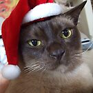 Chocky Christmas Cheer - Happy Holidays! by PERUGINA