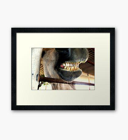 Just had mah teeth cleaned! Framed Print