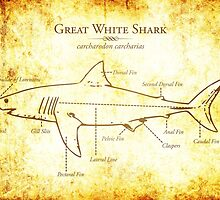 Great White Shark Illustration by marcodeobaldia