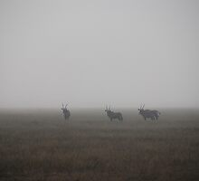 Gemsbok in the Mist, Central Kalahari Game Reserve, Botswana, Africa by Adrian Paul