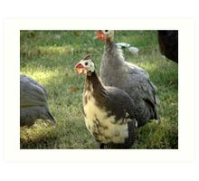Surrounded By Turkeys Art Print