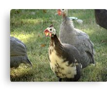 Surrounded By Turkeys Metal Print