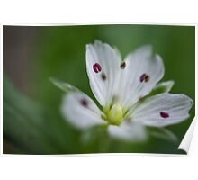 White and Purple Flower Poster