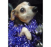 Purple Tinsel Dog Photographic Print