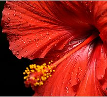 Droplets On Red by Deborah  Benoit