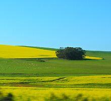 Colorful South Africa by lamathojo