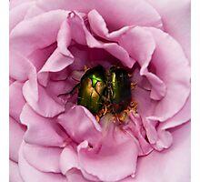 scarabs Photographic Print