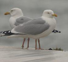 Seagulls by Franco De Luca Calce