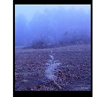 Frost sprig Photographic Print