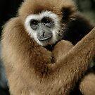 Monkey by mc27