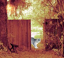 Through The Garden Gate by digitalmidge