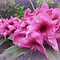 *Avatar/Rhododendrun - Gorgeous flower Cards*