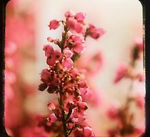 Little Pink Bells by 3lambsdesign