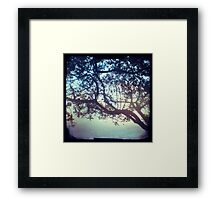 Sunset trees ttv photograph Framed Print