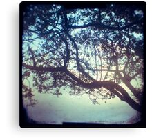 Sunset trees ttv photograph Canvas Print