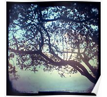 Sunset trees ttv photograph Poster