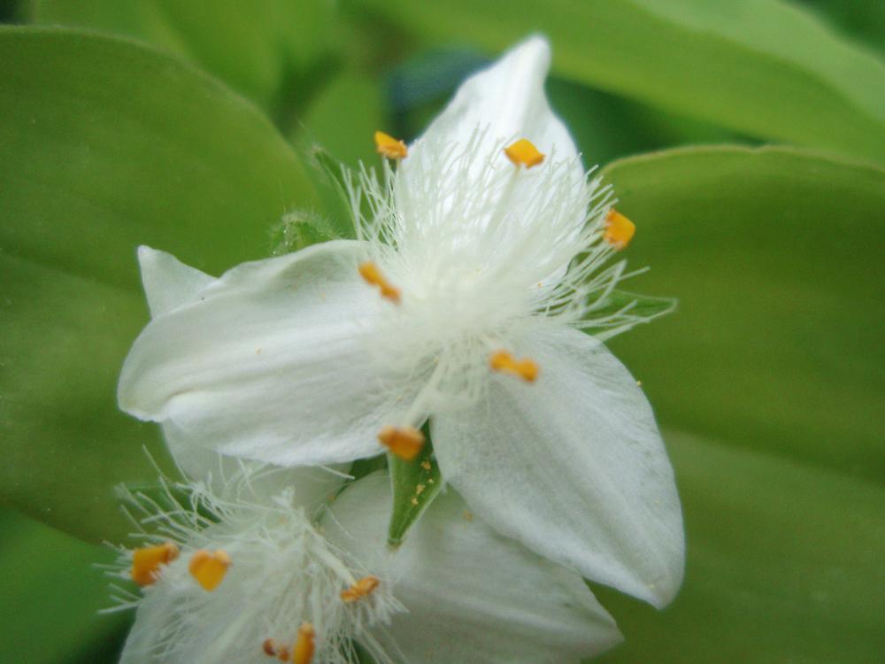 White wild flower by presbi