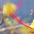 Crimson Threads by Linda Lees