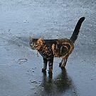 Cat On Ice by Robert Abraham