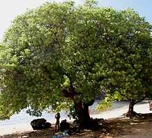 Beach Tree by kevin smith  skystudiohawaii