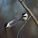 """An """"electric"""" chickadee escape by Normcar"""