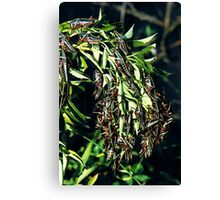 BLACK GRASSHOPPERS Canvas Print