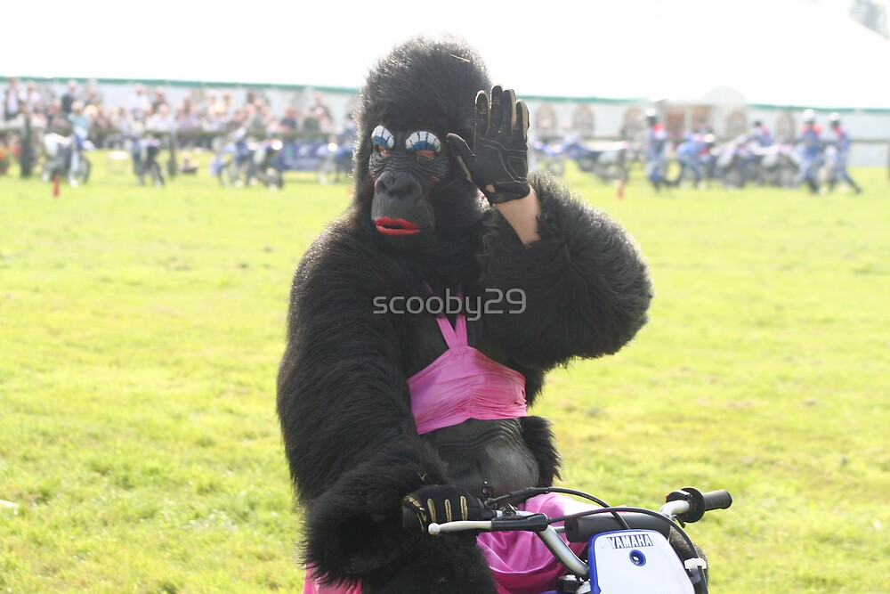 Gorilla Waving by scooby29