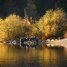 The Golden Reflections of the Bear River by NancyC