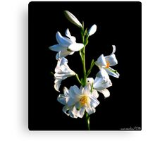 Pretty As You Are Canvas Print
