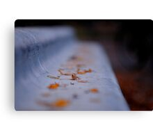 Leaves on a bench; Yoyogi Park, Tokyo, Japan Canvas Print