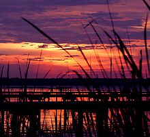 Reed Sunset by aggsys