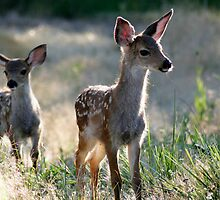 Two fawn Deer - 1838 by BartElder