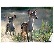 Two fawn Deer - 1838 Poster
