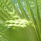 Palm Leaf Abstract by Winona Sharp