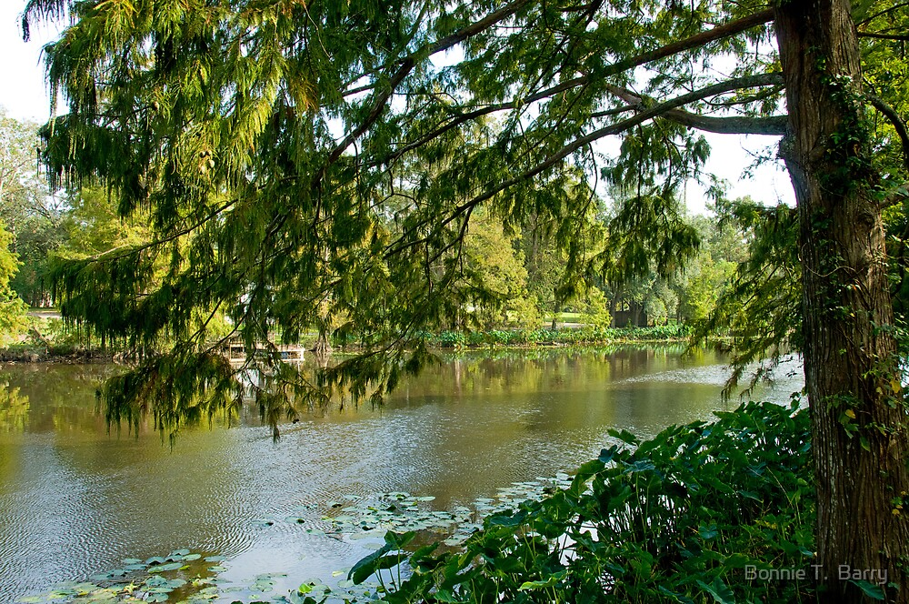On the banks of the Bayou Teche by Bonnie T.  Barry
