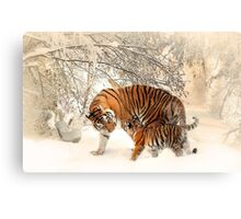 Tigers in snow  Canvas Print