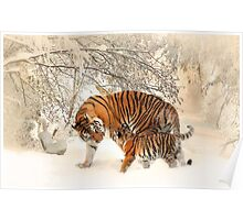 Tigers in snow  Poster