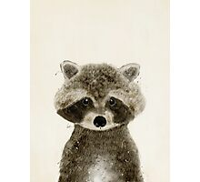 little raccoon Photographic Print