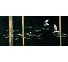 Swamp Lilies Photographic Print