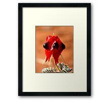 Desert Pea Framed Print