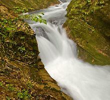 Stream through Vintgar Gorge, Slovenia by acaldwell