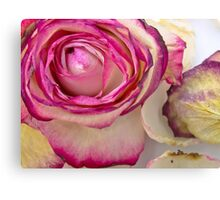 White pink roses 3 Canvas Print