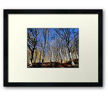 Melogno Forrest Framed Print