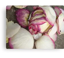 White pink roses 5 Canvas Print
