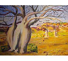 Dancing boabs ~~Australia Photographic Print