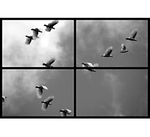 Fly By Photographic Print
