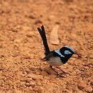 Blue Bird by saharabelle