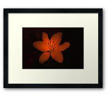lilly low light Framed Print