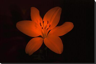 lilly low light by KeepsakesPhotography Michael Rowley